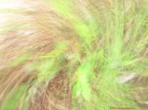 faces and figures in a photodigital camera motion of twigs and grass,images within images